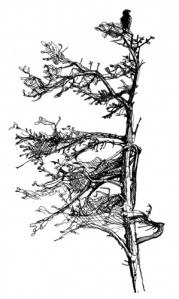 sprucebird-299x500